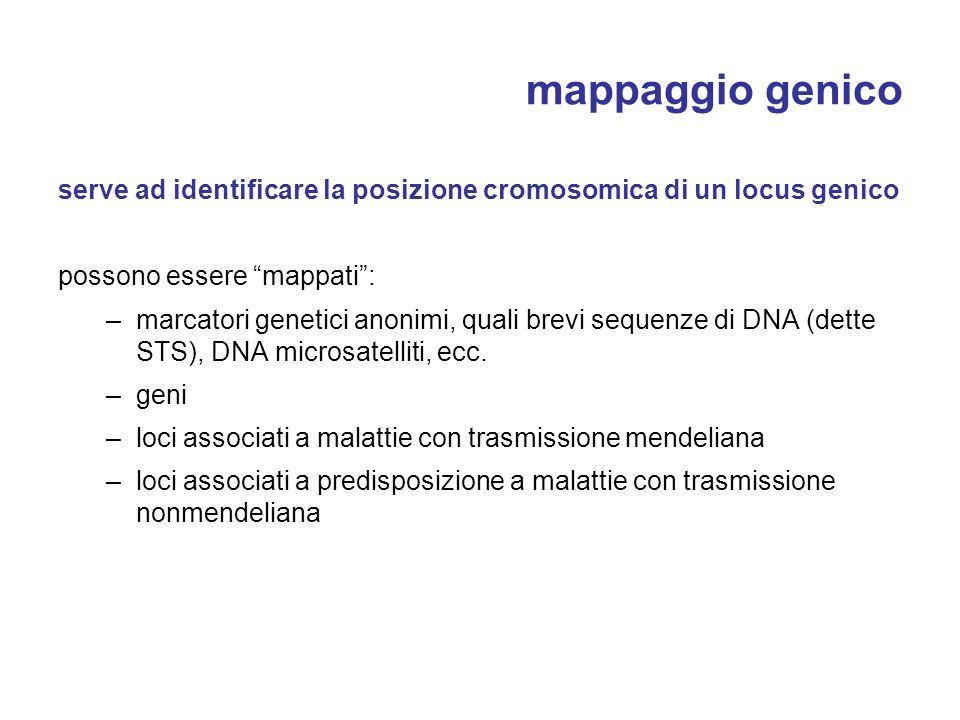mappaggio genico serve ad identificare la posizione cromosomica di un locus genico. possono essere mappati :