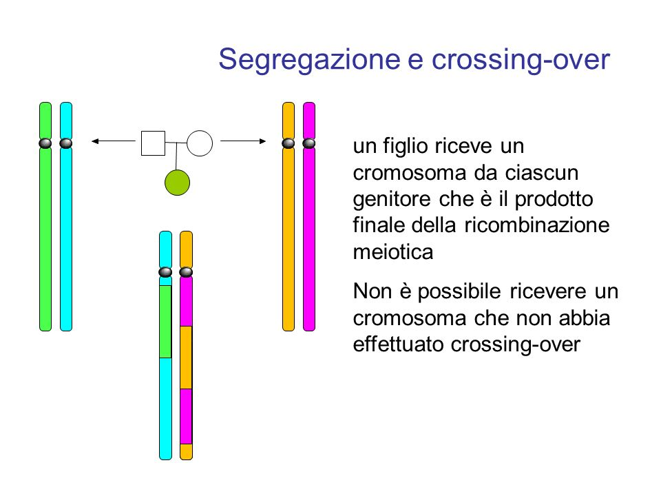 Segregazione e crossing-over