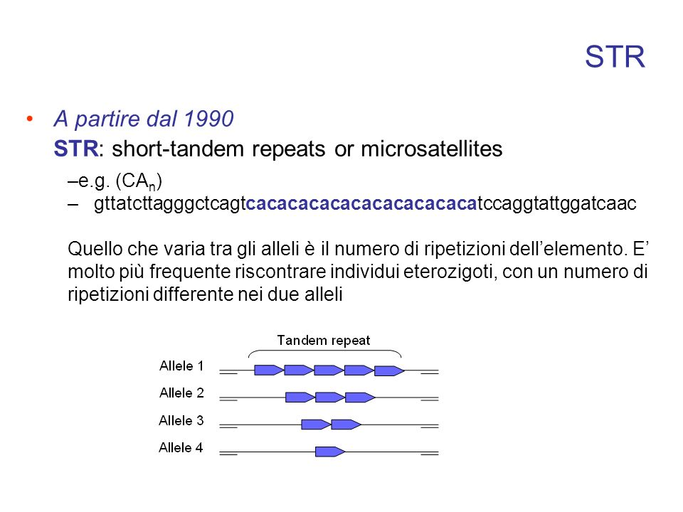 STR A partire dal 1990 STR: short-tandem repeats or microsatellites