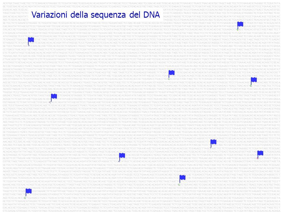 Variazioni della sequenza del DNA