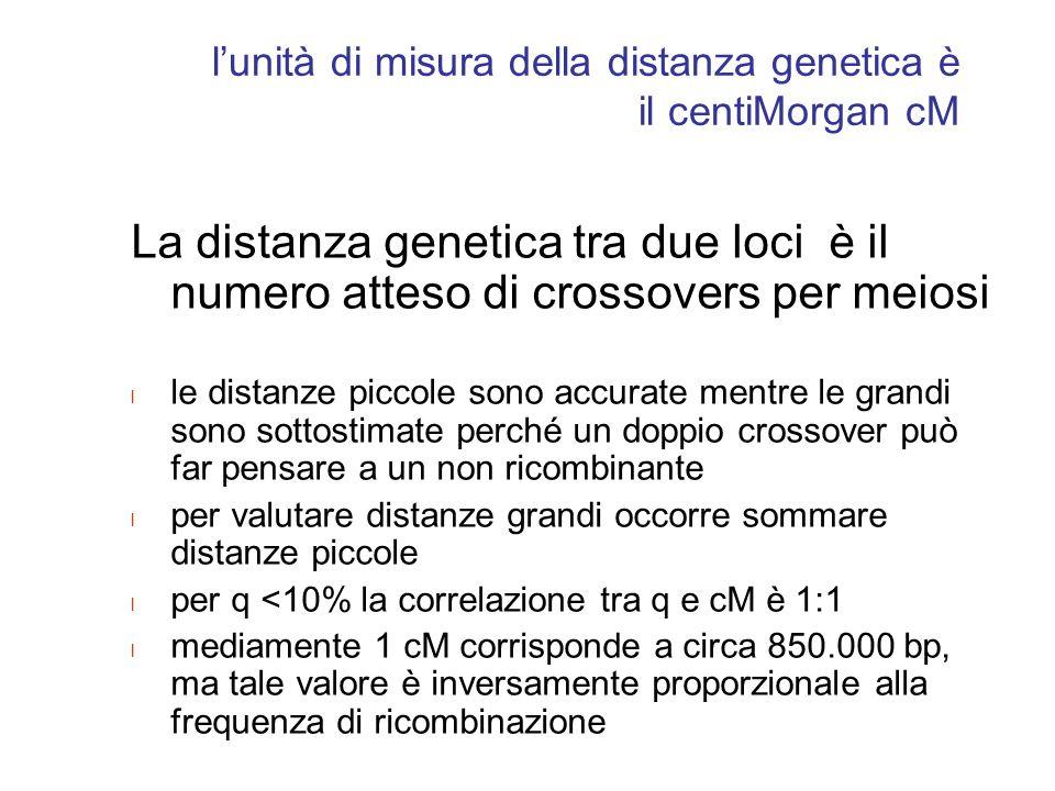 l'unità di misura della distanza genetica è il centiMorgan cM