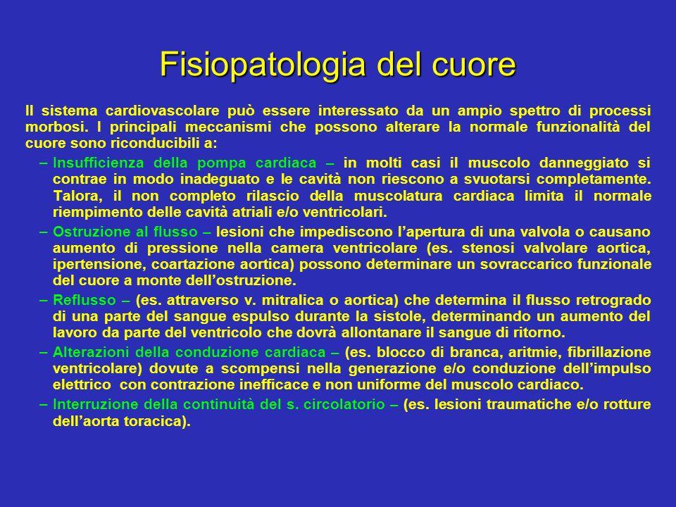 Fisiopatologia del cuore