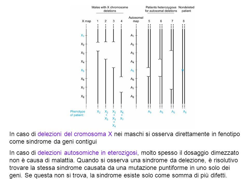 In caso di delezioni del cromosoma X nei maschi si osserva direttamente in fenotipo come sindrome da geni contigui