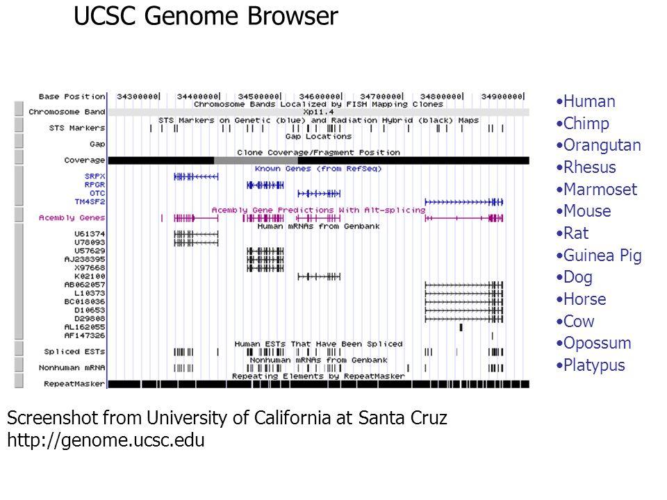 UCSC Genome Browser Human. Chimp. Orangutan. Rhesus. Marmoset. Mouse. Rat. Guinea Pig. Dog.