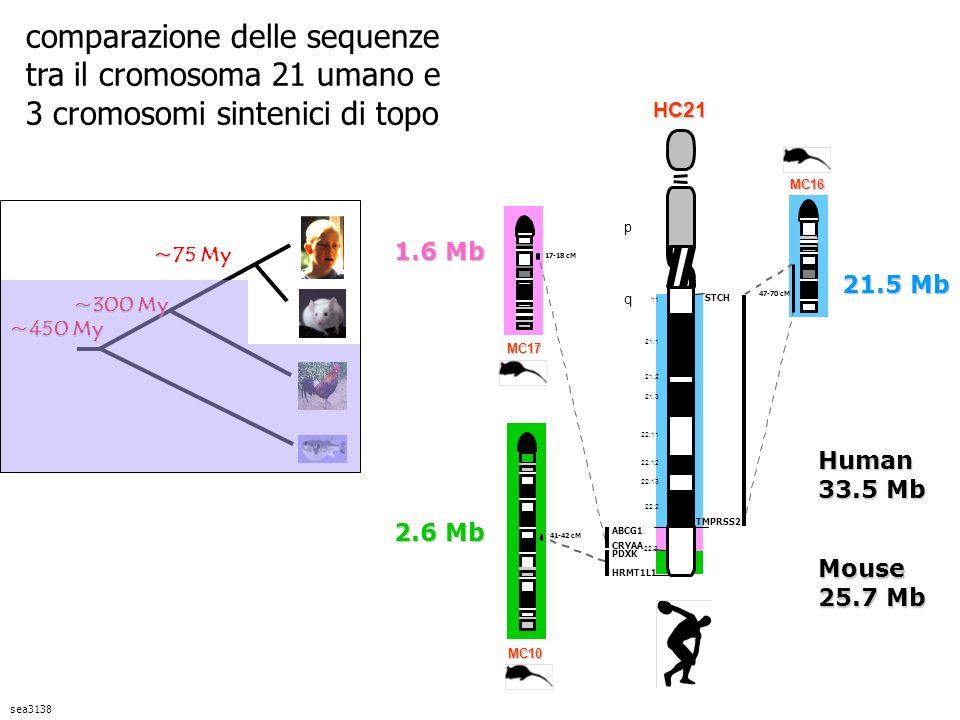 comparazione delle sequenze tra il cromosoma 21 umano e