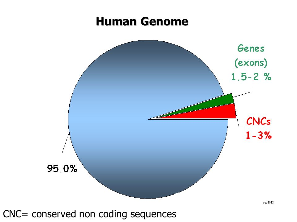 Human Genome sea3093 CNC= conserved non coding sequences