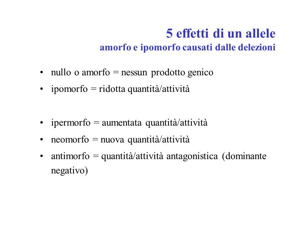5 effetti di un allele amorfo e ipomorfo causati dalle delezioni