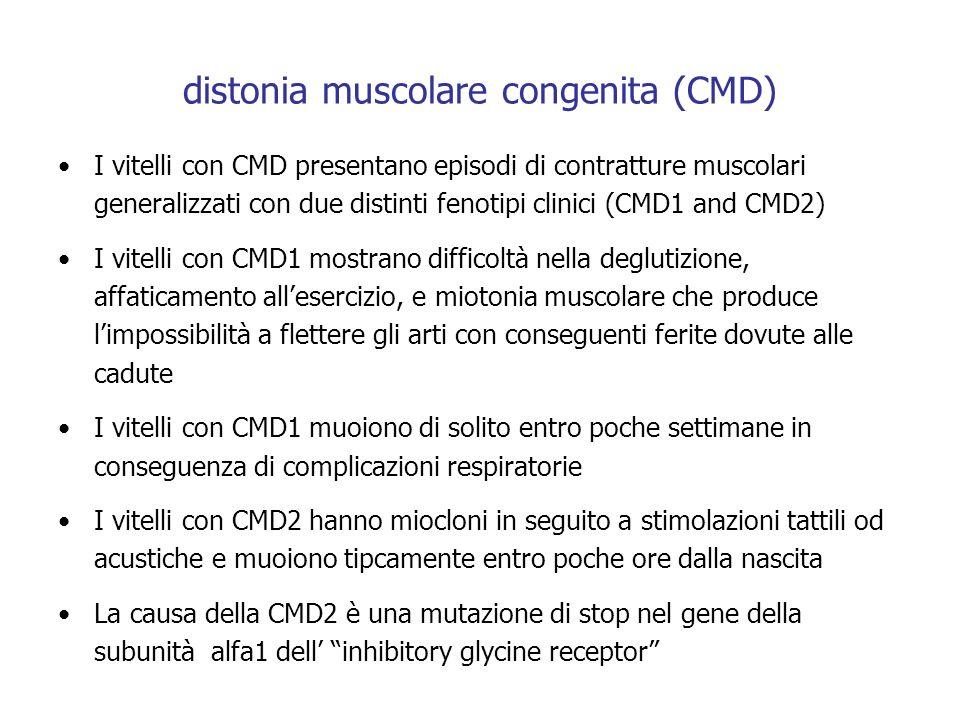 distonia muscolare congenita (CMD)