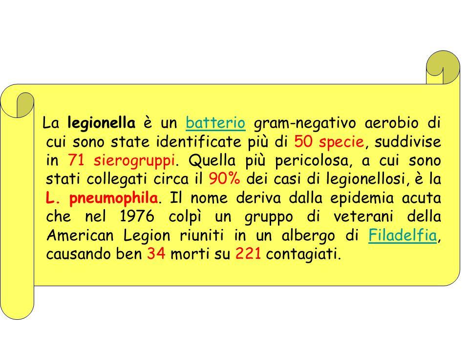 La legionella è un batterio gram-negativo aerobio di cui sono state identificate più di 50 specie, suddivise in 71 sierogruppi.