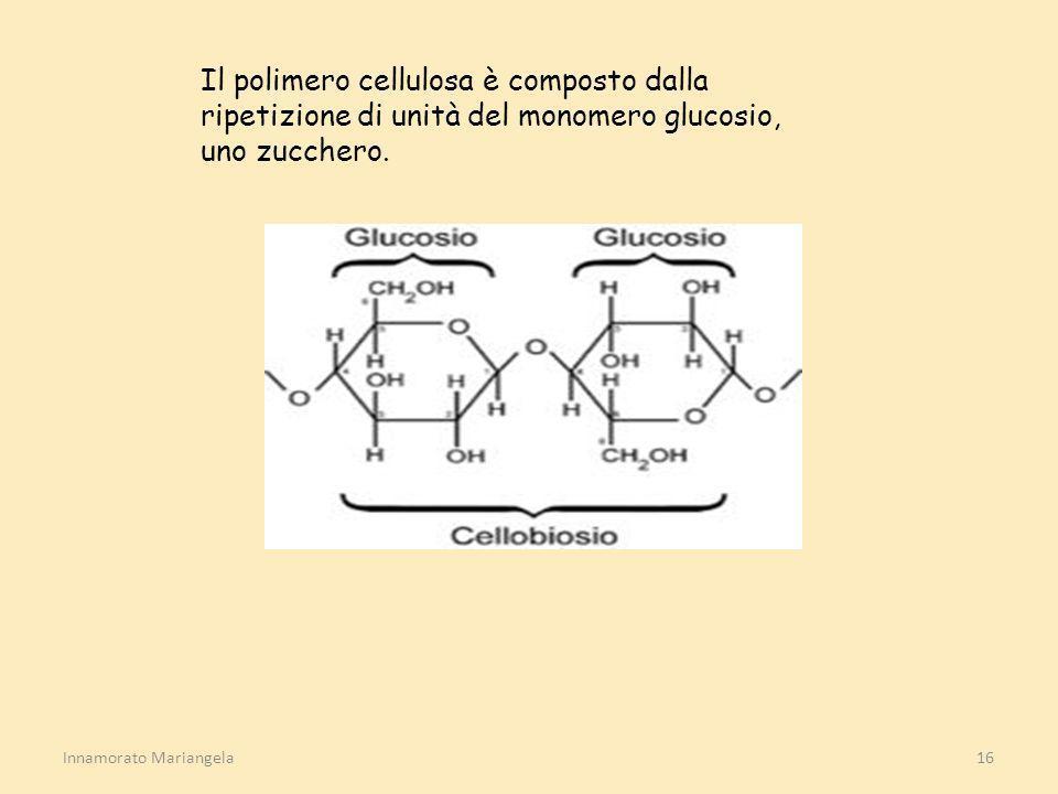 Il polimero cellulosa è composto dalla