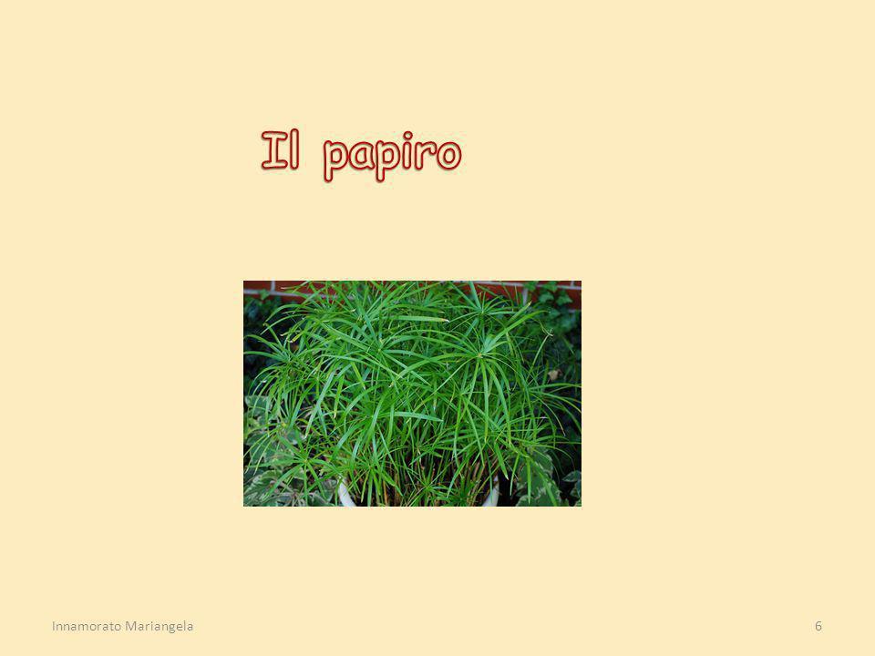Il papiro Innamorato Mariangela