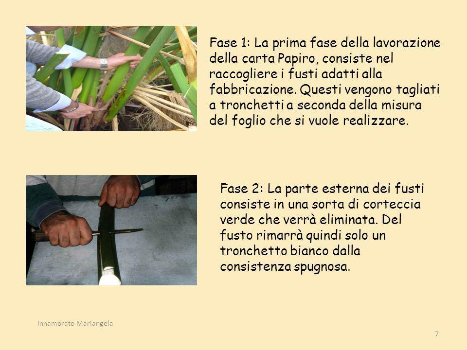 Fase 1: La prima fase della lavorazione della carta Papiro, consiste nel raccogliere i fusti adatti alla fabbricazione. Questi vengono tagliati a tronchetti a seconda della misura del foglio che si vuole realizzare.
