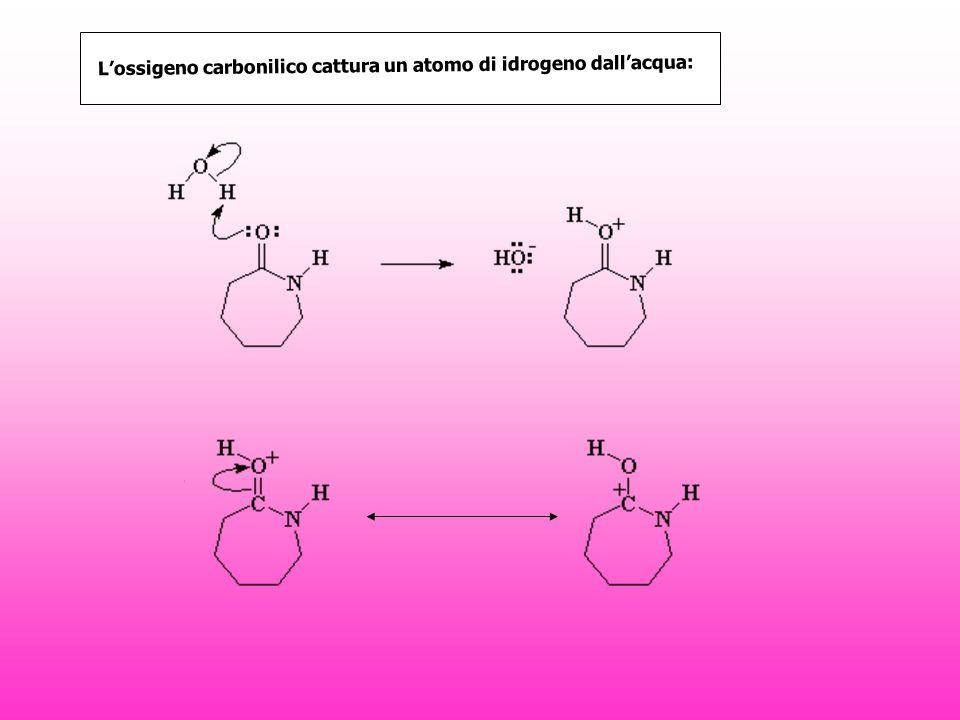 L'ossigeno carbonilico cattura un atomo di idrogeno dall'acqua: