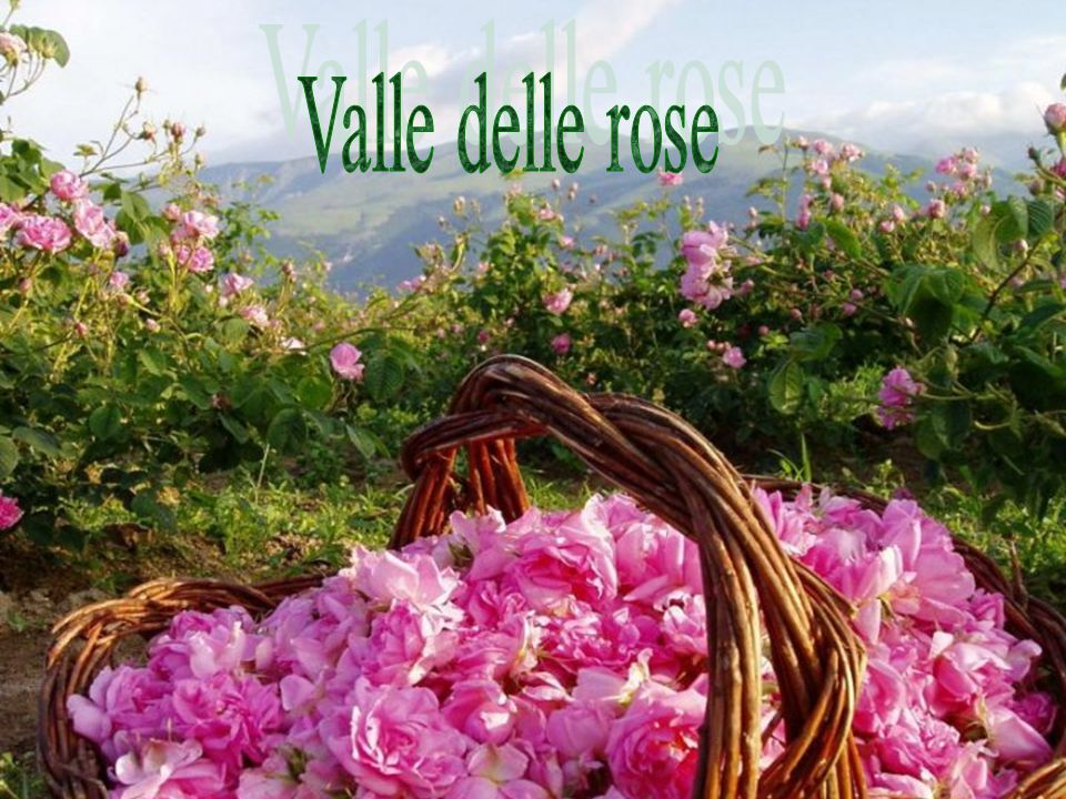 Valle delle rose