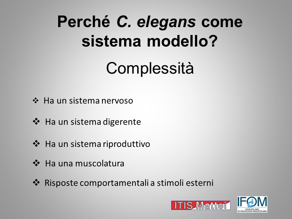 Perché C. elegans come sistema modello