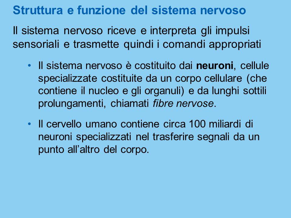 Struttura e funzione del sistema nervoso