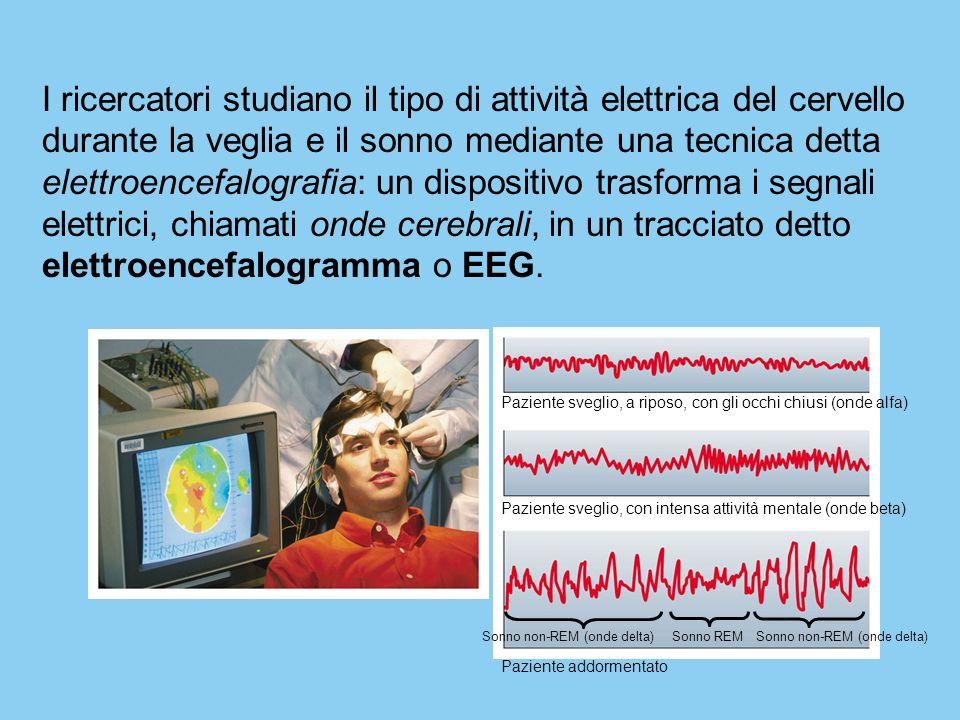 I ricercatori studiano il tipo di attività elettrica del cervello durante la veglia e il sonno mediante una tecnica detta elettroencefalografia: un dispositivo trasforma i segnali elettrici, chiamati onde cerebrali, in un tracciato detto elettroencefalogramma o EEG.