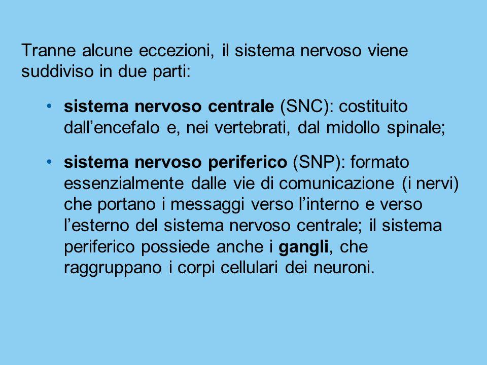 Tranne alcune eccezioni, il sistema nervoso viene suddiviso in due parti: