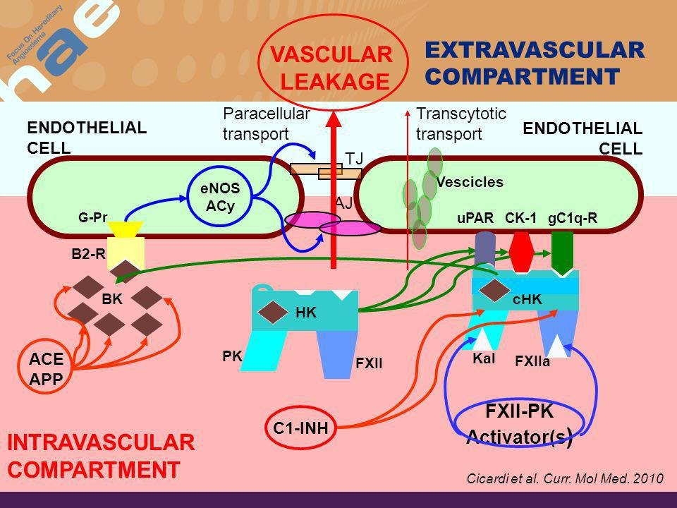 EXTRAVASCULAR COMPARTMENT