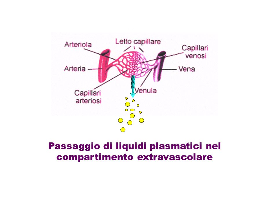 Passaggio di liquidi plasmatici nel compartimento extravascolare