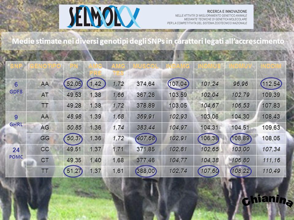Medie stimate nei diversi genotipi degli SNPs in caratteri legati all'accrescimento