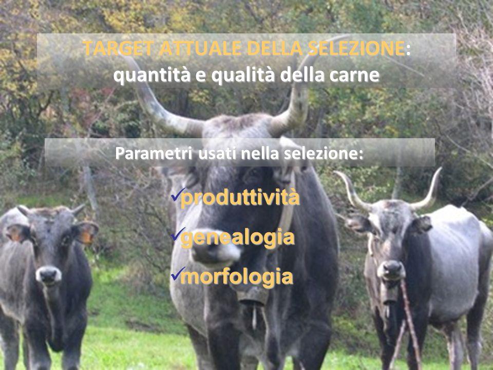 TARGET ATTUALE DELLA SELEZIONE: quantità e qualità della carne
