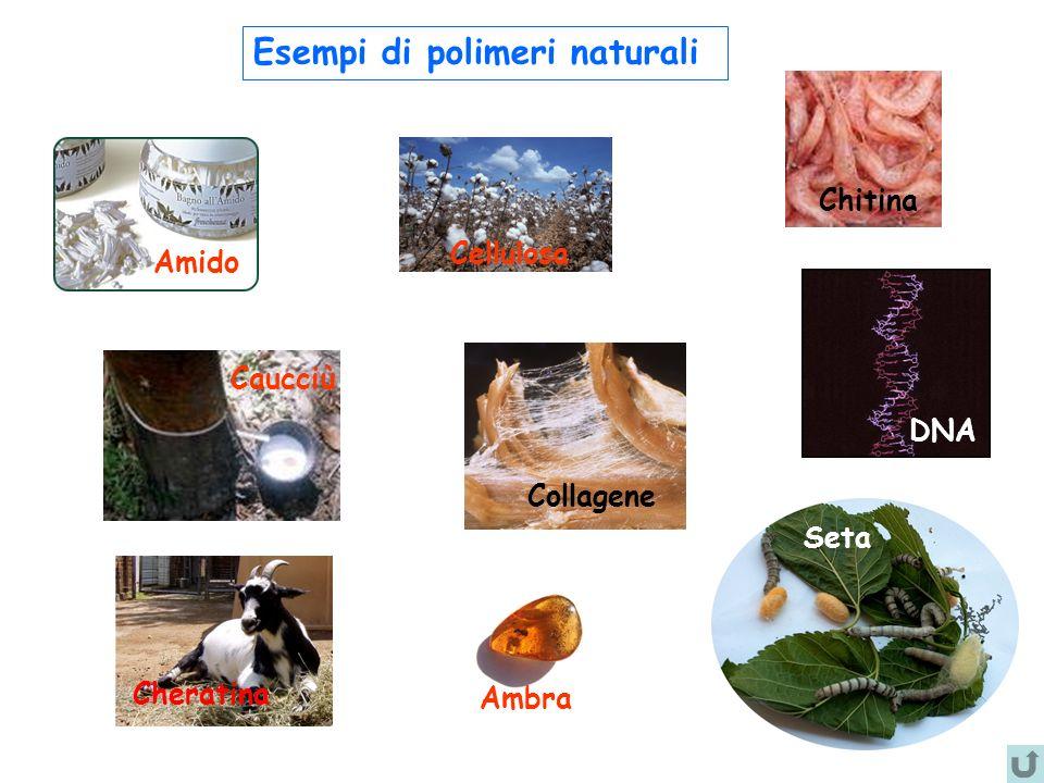 Esempi di polimeri naturali