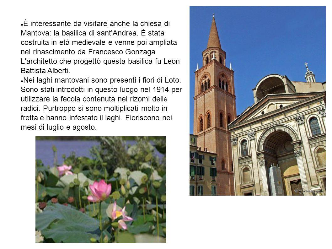 È interessante da visitare anche la chiesa di Mantova: la basilica di sant Andrea. È stata costruita in età medievale e venne poi ampliata nel rinascimento da Francesco Gonzaga. L architetto che progettò questa basilica fu Leon Battista Alberti.