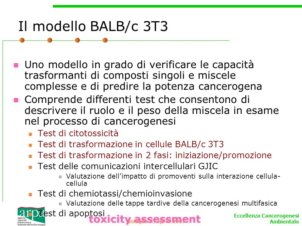 Il modello BALB/c 3T3