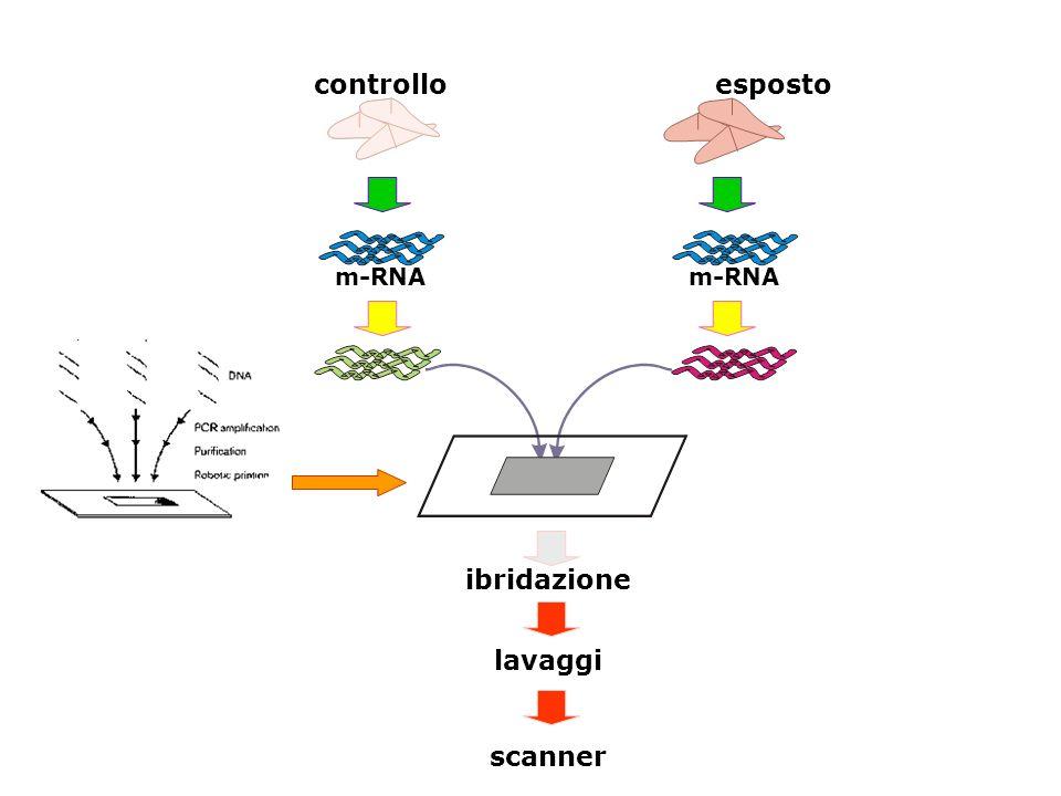 controllo esposto ibridazione lavaggi scanner