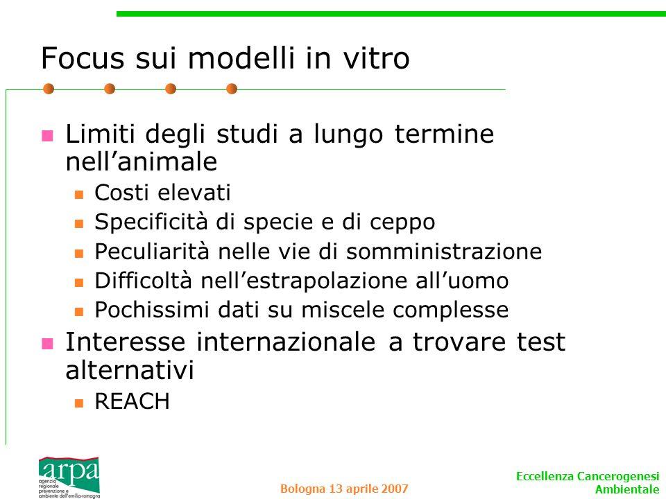 Focus sui modelli in vitro