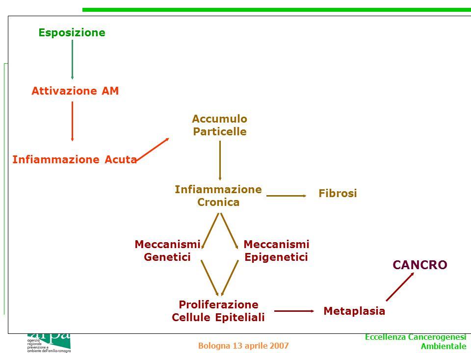 CANCRO Esposizione Attivazione AM Accumulo Particelle