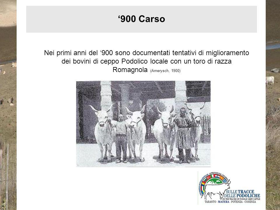 '900 Carso