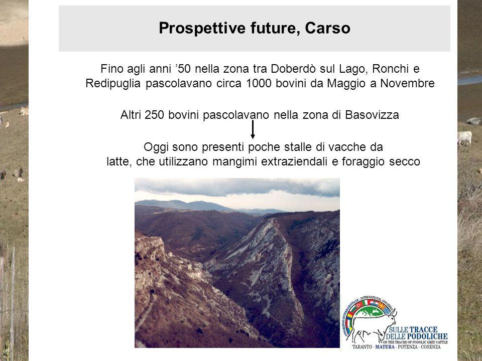 Prospettive future, Carso