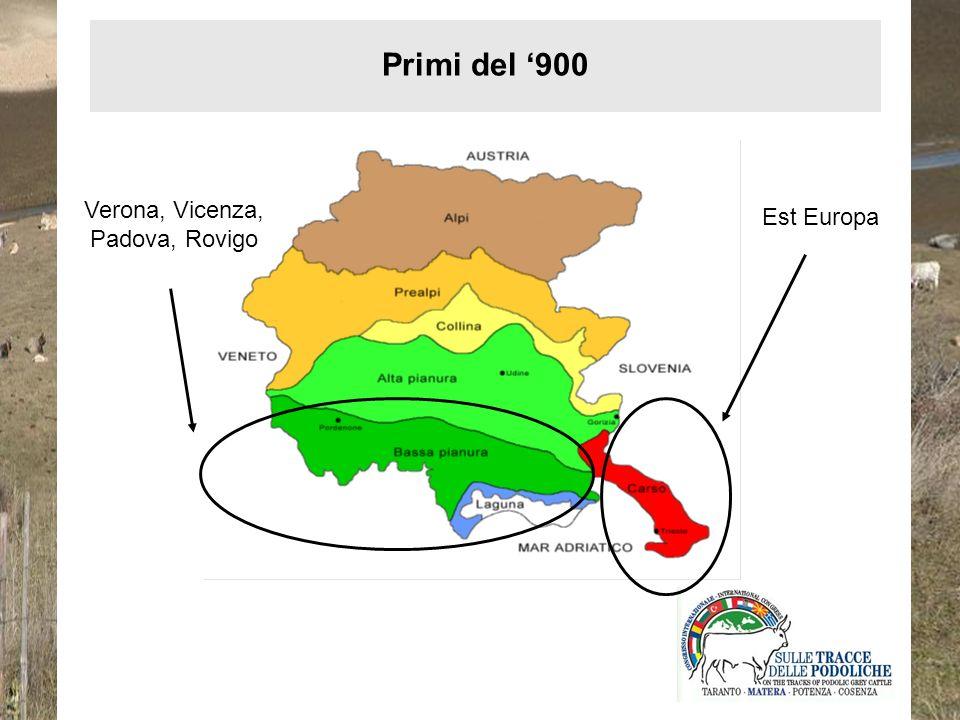 Verona, Vicenza, Padova, Rovigo