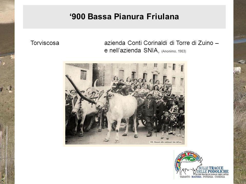 '900 Bassa Pianura Friulana