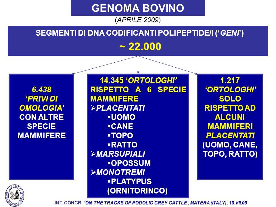 GENOMA BOVINO ed. 14.345 'ORTOLOGHI' RISPETTO A 6 SPECIE MAMMIFERE