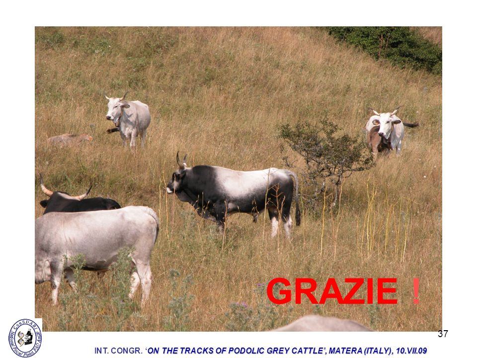 GRAZIE ! INT. CONGR. 'ON THE TRACKS OF PODOLIC GREY CATTLE', MATERA (ITALY), 10.VII.09