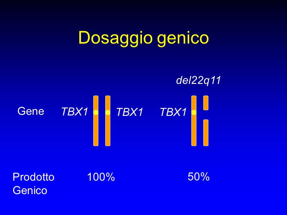Dosaggio genico del22q11 Gene TBX1 TBX1 TBX1 Prodotto Genico 100% 50%
