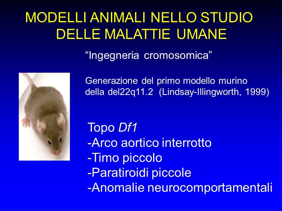 MODELLI ANIMALI NELLO STUDIO