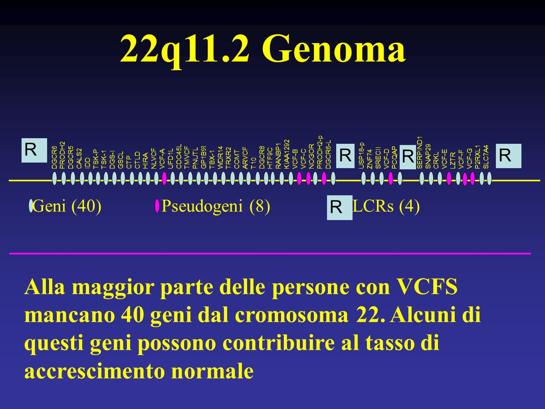 PRODH2-p SERPIND1. KIAA1292. PRODH2. DGCR6-L. RANBP1. DGCR6. DGCR5. CDC45L. TMVCF. WDR14. NOGOR.