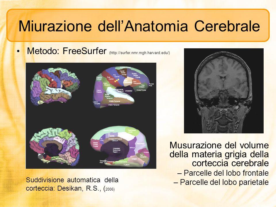 Miurazione dell'Anatomia Cerebrale