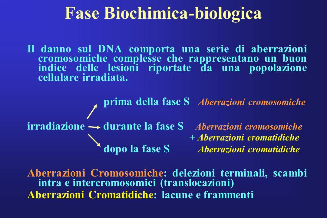 Fase Biochimica-biologica