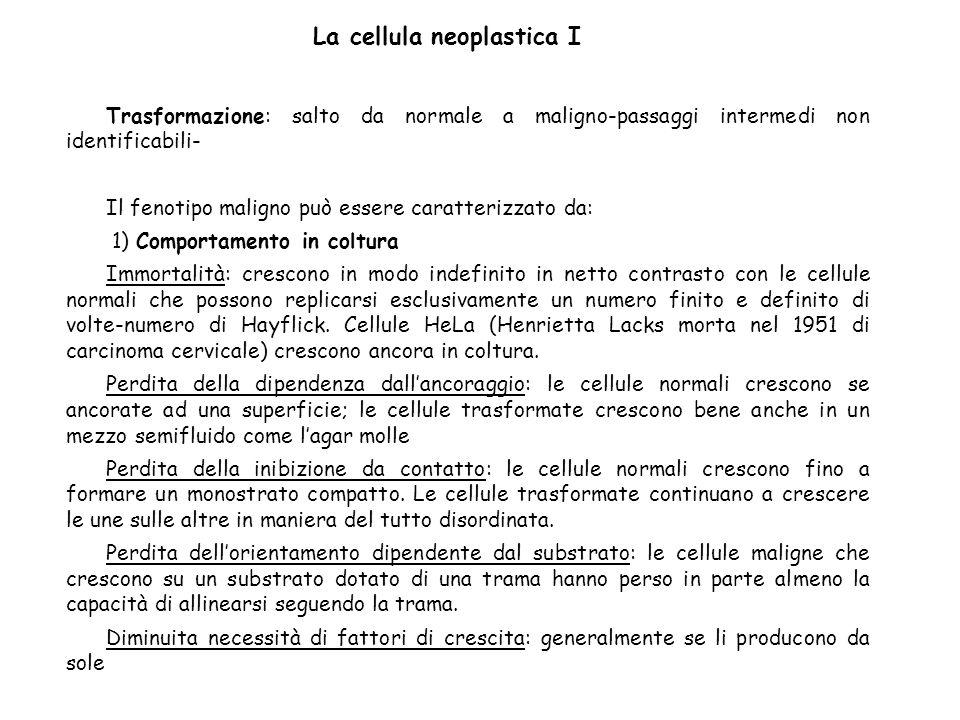 La cellula neoplastica I