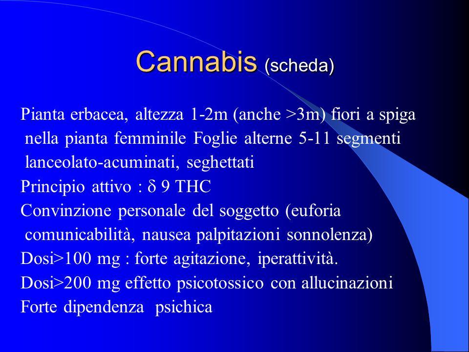 Cannabis (scheda) Pianta erbacea, altezza 1-2m (anche >3m) fiori a spiga. nella pianta femminile Foglie alterne 5-11 segmenti.