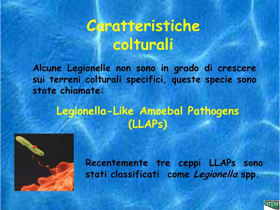 Caratteristiche colturali Legionella-Like Amoebal Pathogens (LLAPs)