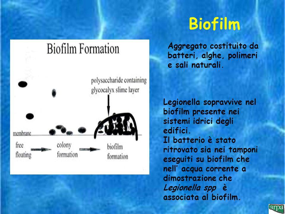 Biofilm Aggregato costituito da batteri, alghe, polimeri e sali naturali.