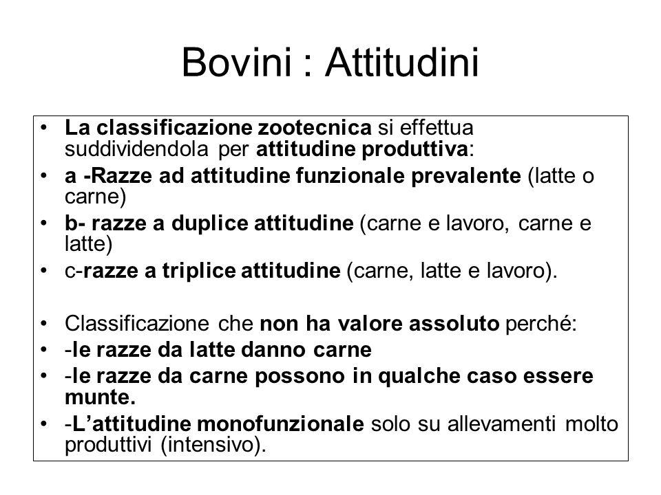 Bovini : Attitudini La classificazione zootecnica si effettua suddividendola per attitudine produttiva: