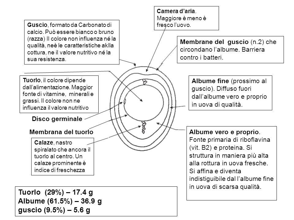 Tuorlo (29%) – 17.4 g Albume (61.5%) – 36.9 g guscio (9.5%) – 5.6 g