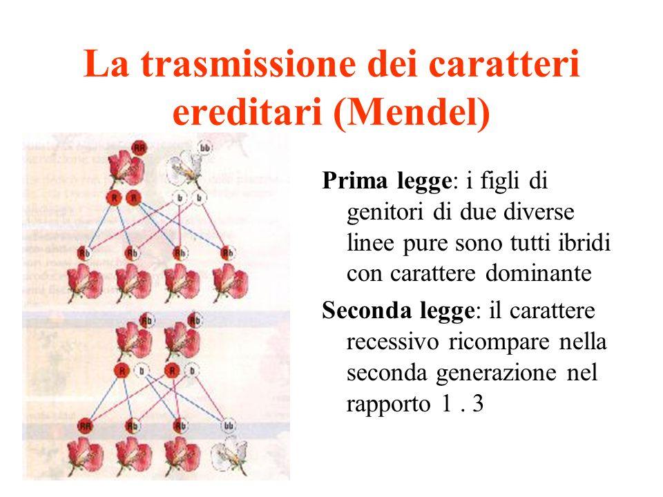 La trasmissione dei caratteri ereditari (Mendel)